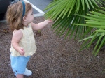 Chloe's first palm tree