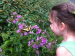 We have a new fascination with butterflies it seems. Especially ones that let us get really close.